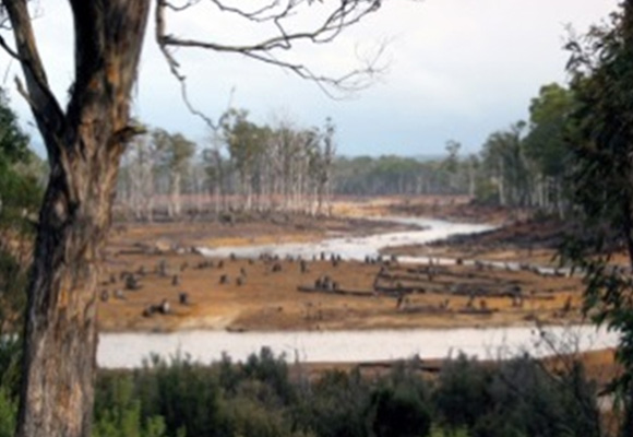 Stopp-der-Abholzung-0